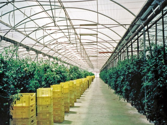 SUNTUF_Plus_Vegetable_Greenhouse_01(5).jpg